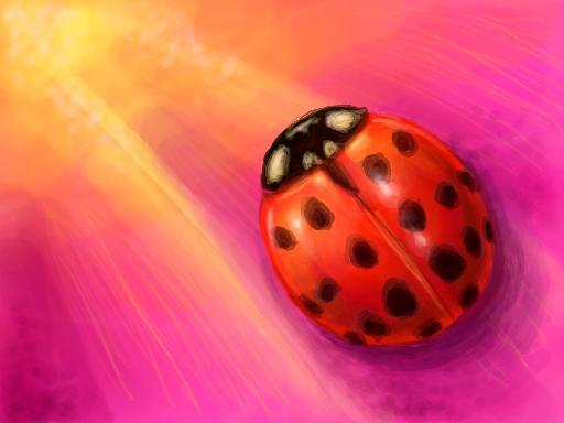 Asian ladybug (Harmonia axyridis) on a pink flower